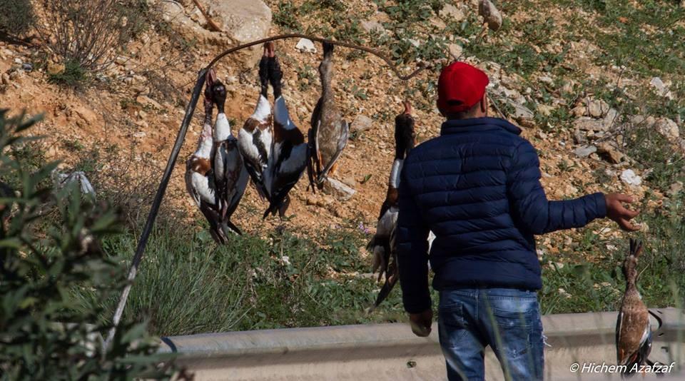 Braconnage Tunisie
